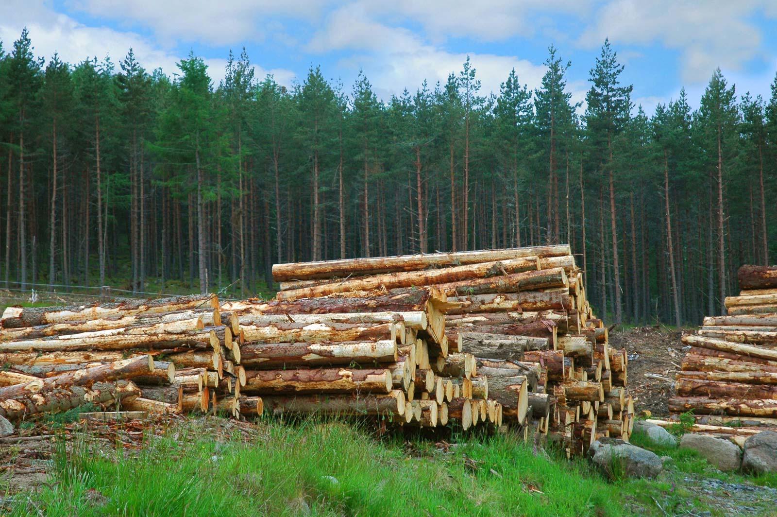 Pengelolaan dan Pemanfaatan Sumber Daya Alam