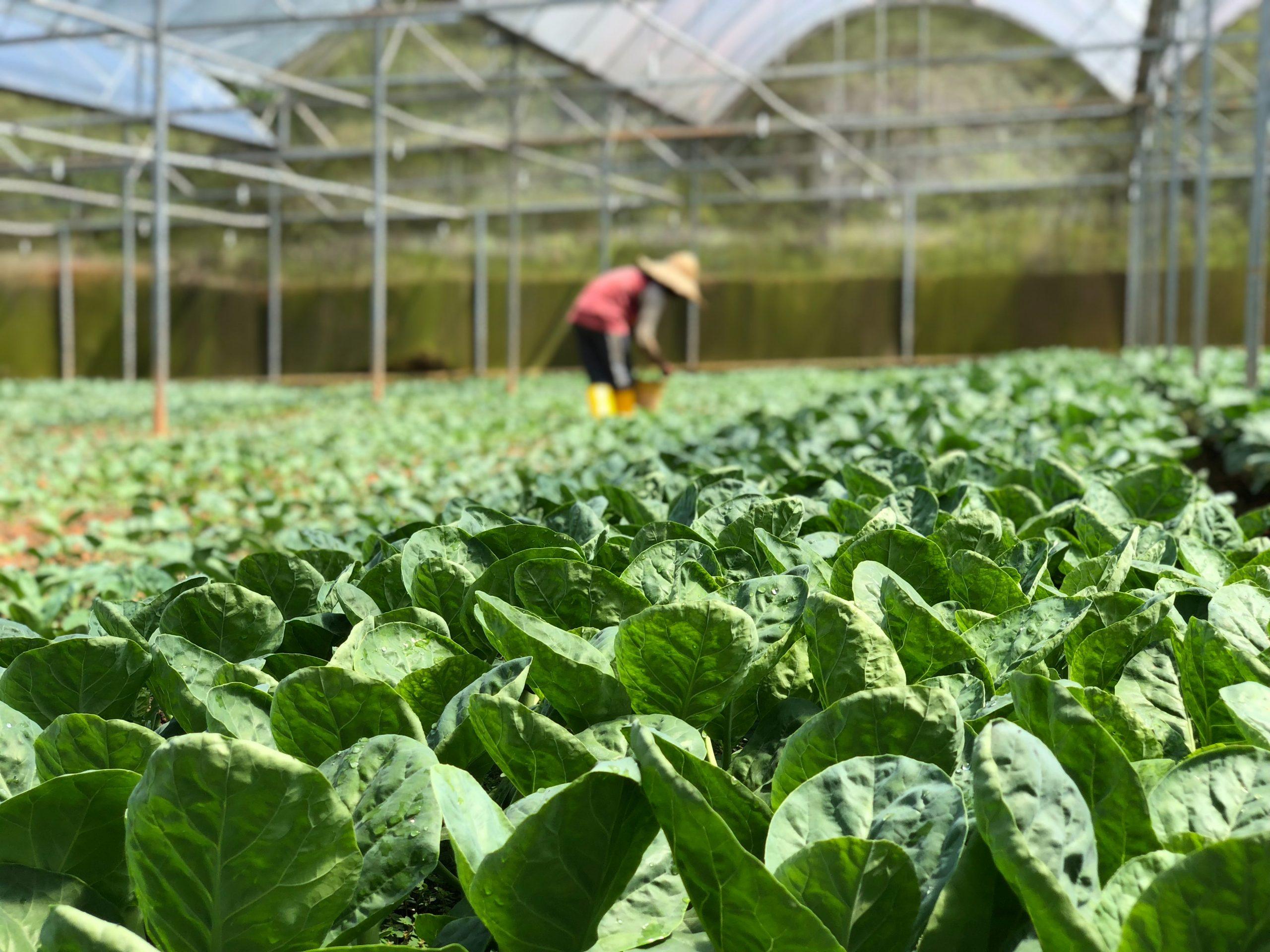 Manfaat Eco Farming untuk Tanaman